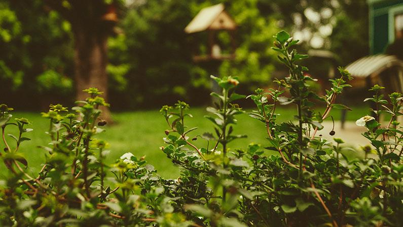 Garten mit Büschen